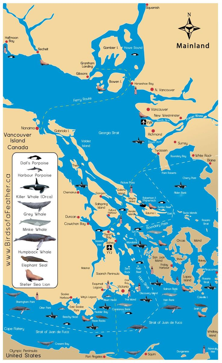 San Juan Islands map w/ cetacean ranges. Ferry riders has the opportunity to see many types of wildlife