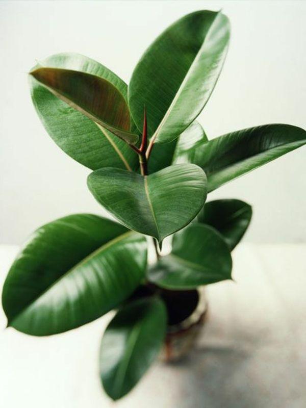 tolle zimmerpflanzen ideen für zu hause
