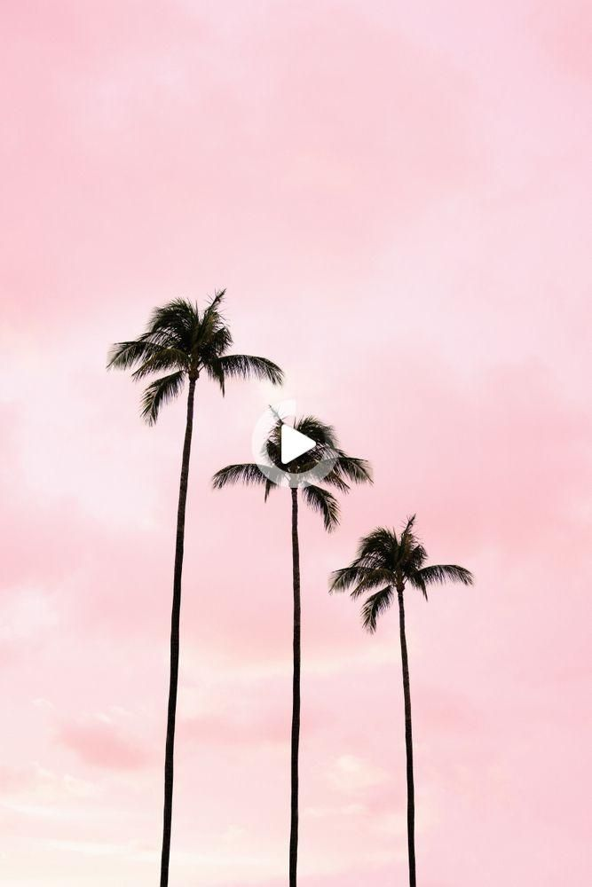 Tattoo Style In 2021 Palm Tree Photography Palm Trees Wallpaper Photo Wall Collage Blush pink cute aesthetic wallpapers