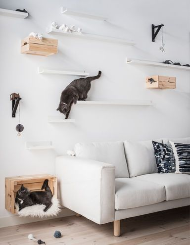 Two cats hanging out on DIY cat shelves made using IKEA MOSSLANDA picture ledges at different distances and heights above a sofa #catdiy
