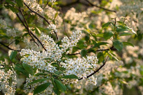 Kampinoski Park Narodowy / by PolandMFA, via Flickr  www.flickr.com/photos/polandmfa