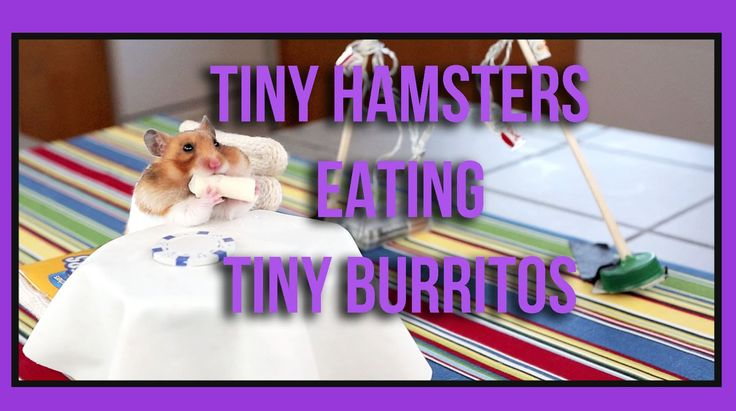 Tiny Hamsters Eating Tiny Burritos - I really needed that this morning!