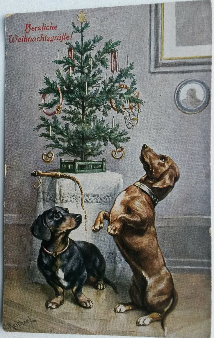 Vintage postcard Dachshunds at Christmas tree by Reichert