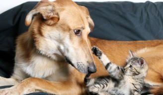 Perros vs. gatos, ¿cuál es más inteligente?