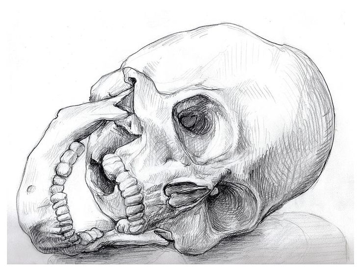 pencil drawings of skulls - Google Search