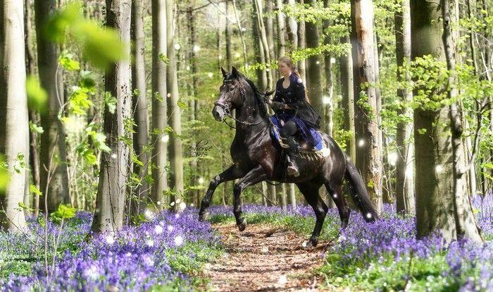 Jammin' in het Hallerbos - fotoshoot thema sprookje door E-horse Equine Photography