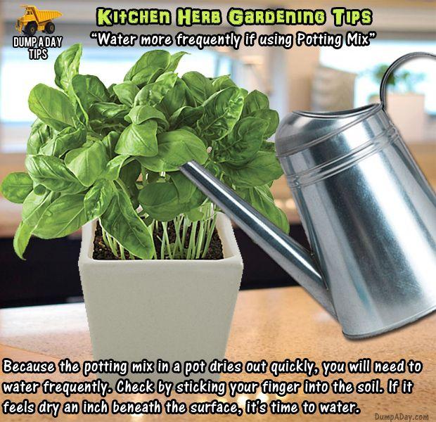 20 Great Herb Garden Ideas: 1000+ Ideas About Kitchen Herb Gardens On Pinterest