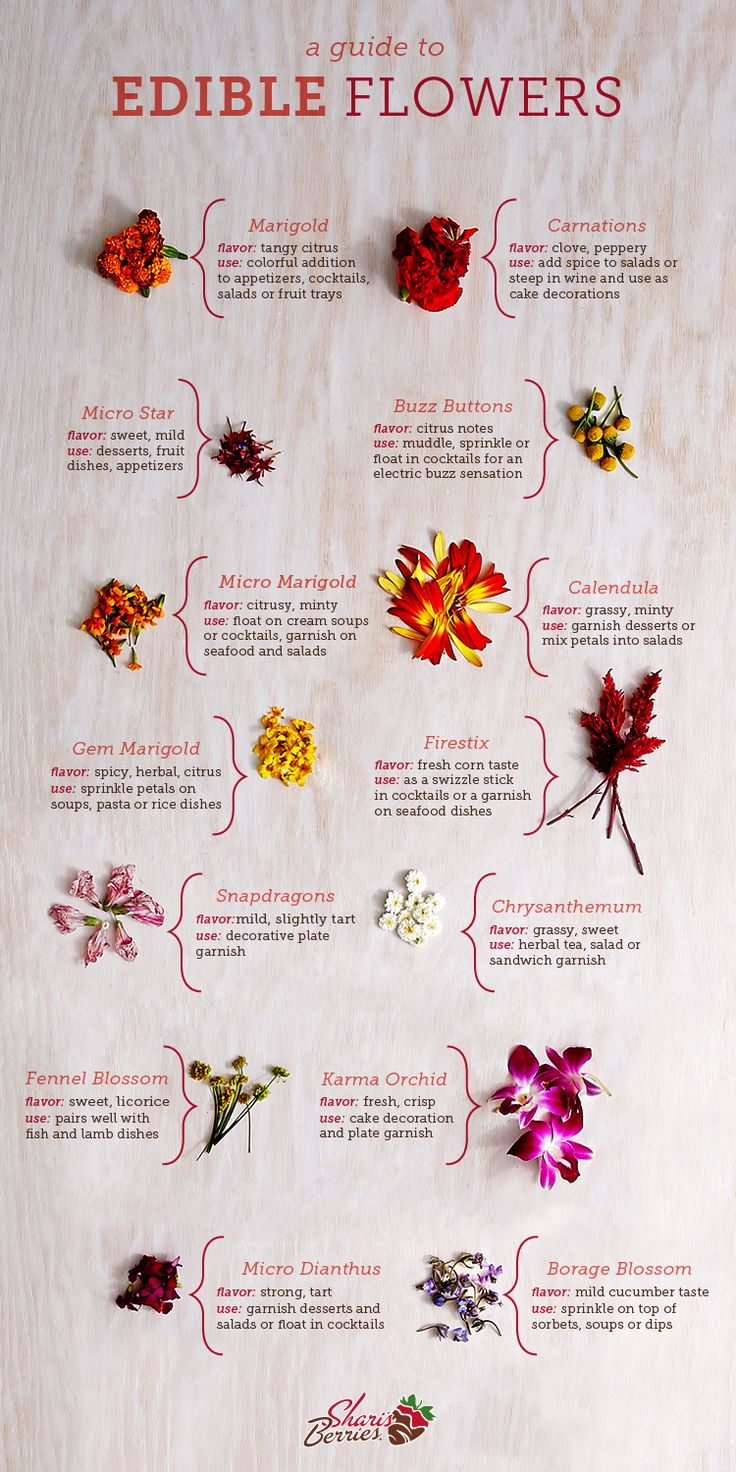Our Guide to Edible Flowers | Shari's Berries Blog