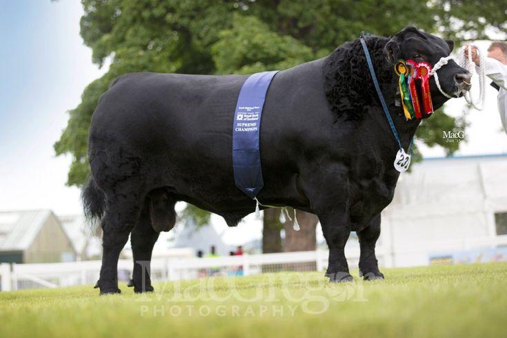 8 Best Cow Bull Salt Amp Pepper Shakers Images On Pinterest