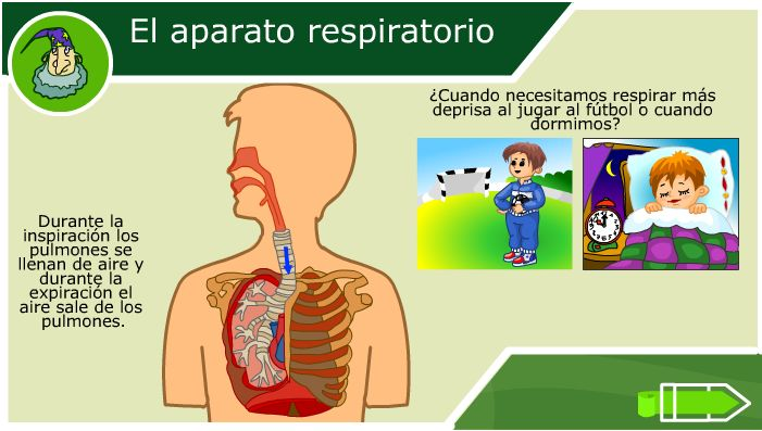 "El aparato respiratorio ""2do ciclo"" Interactivo"