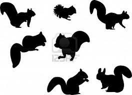 Afbeeldingsresultaat voor tekening eekhoorn