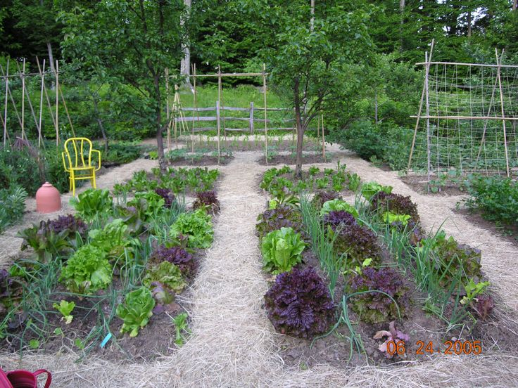 vegetable garden. love the layout and walkways and raised bed design without the expense of lumber.