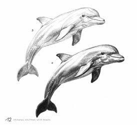 Op deze tekening zie je hoe ze de dolfijn schaduwen hebben gegeven, dus hoe het plastischer lijkt.