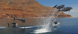 Baja California Sur videos Loreto , the new magic town | La Mision Loreto