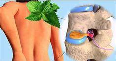 A hortelã é um ótimo tratamento para quem sofre com dores nos joelhos e quadril.