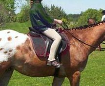 Horseback riding tips for beginners