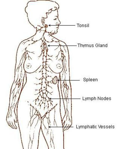 10 metodi naturali per stimolare il sistema linfatico e migliorare la salute