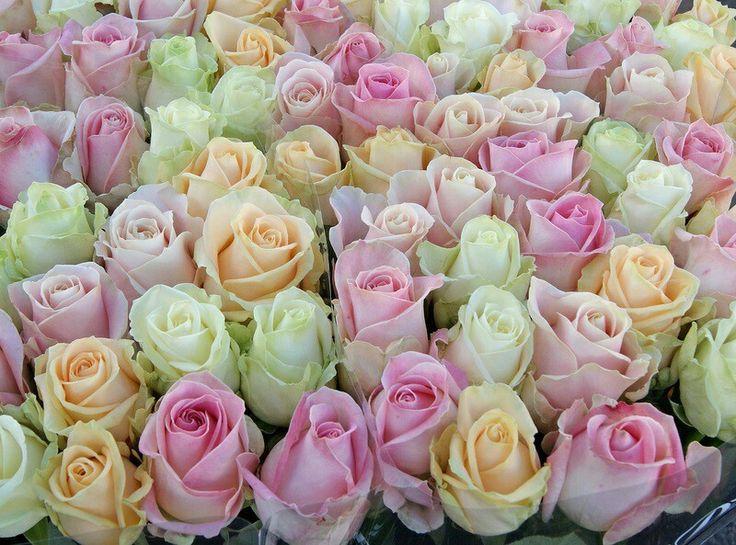 Valentijns rozen hoeven niet altijd rood te zijn. Love avalanche roses in all colors.