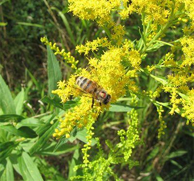 http://www.agprofessional.com/news/bee-population-rising-around-world?ss=news Bee population rising around the world