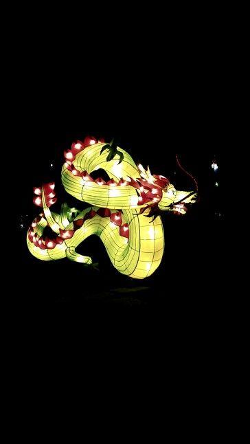Dragon of Lampion Garden