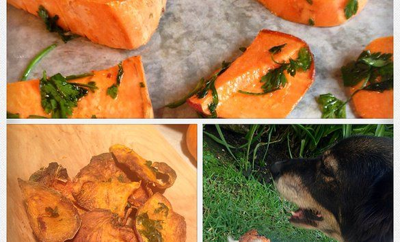 Papas de camote para perro. Cruchy sweet potatoe dog treat. www.guaurmet.com