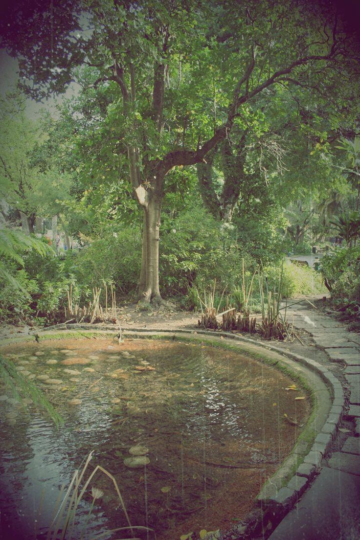 The Garden, Cape Town