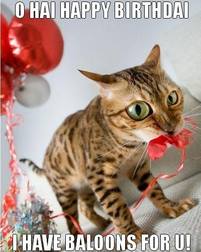 Funny Cat Pictures Birthday