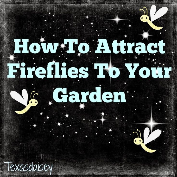 Texasdaisey Creations: How To Attract Fireflies To Your Garden