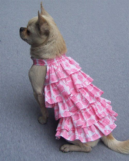 Summer dress names pets