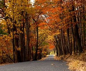 Foliage Tours, Festivals and Wineries: Top Things to Do in Central Pennsylvania in the Fall
