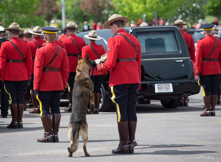 K9 dog Danny, sniffs the stetson of his partner, slain Const. David Ross' during the funeral procession for the three RCMP officers who were killed on duty, at their regimental funeral at the Moncton Coliseum in Moncton, N.B. on Tuesday, June 10, 2014.