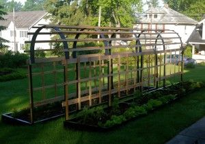 Building a Trellis for Tomato Plants @learningandyearning