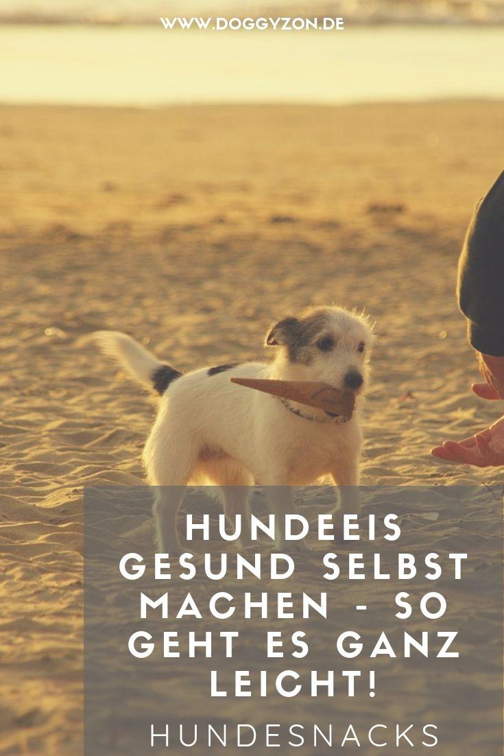 Hundeeis Selbst Machen Diese Zutaten Eignen Sich Perfekt Doggyzon Eis Fur Hunde Hunde Snacks Hunde Ernahrung
