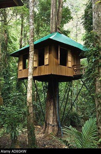 Image: Treehouse eco accommodation in Thailand. (© Gary Dublanko/Alamy)
