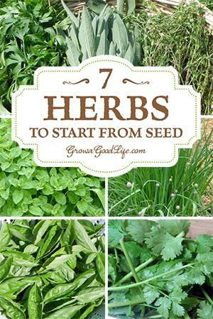 It's more practical to plant some herbs from seed. | 7 Herbs to Start from Seed | Grow a Good Life