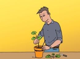 Geraniums stekken