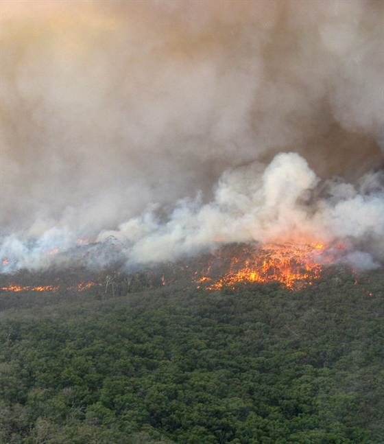 Summer... An intense crown fire burns in a eucalyptus-dominated wet sclerophyll forest in the Kilmore area of Victoria, Australia on Feb. 2, 2009.