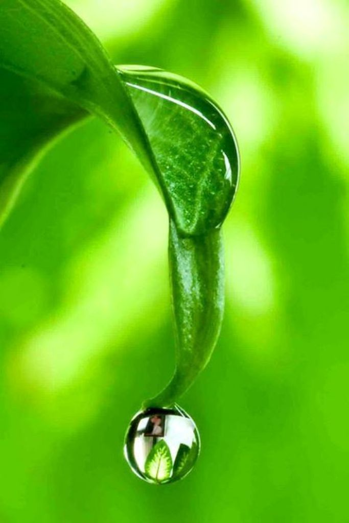 Green Leaf and Droplet by chinakarl (very busy) - Karl-Heinz Adam