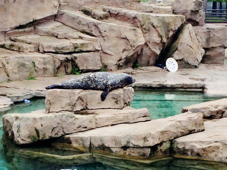 Como Zoo and Conservatory