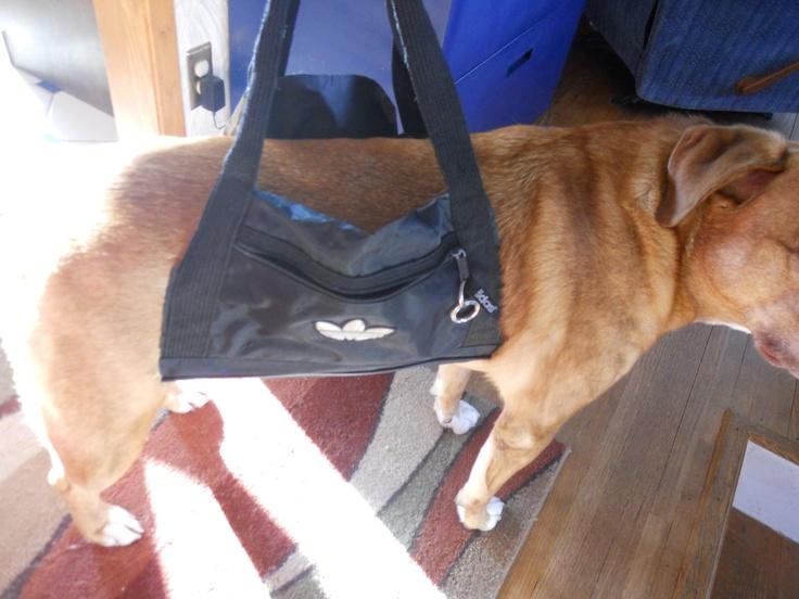 For Harvey Diy Dog Sling Aid Adidas Duffle Bag Cut Off Sides Top Flap Zipper