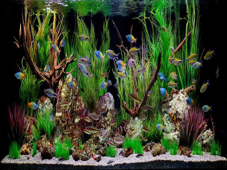 ideas for tropical aquariums | 18 Photos of the How to Create Aquarium Decoration Themes