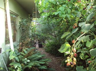 Hedge to Food Forest - Suburban Permaculture