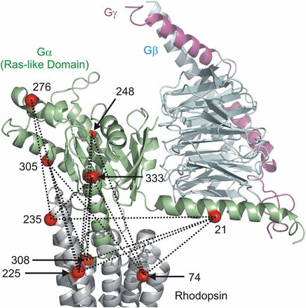 Gi- and Gs-coupled GPCRs show different modes of G-protein binding