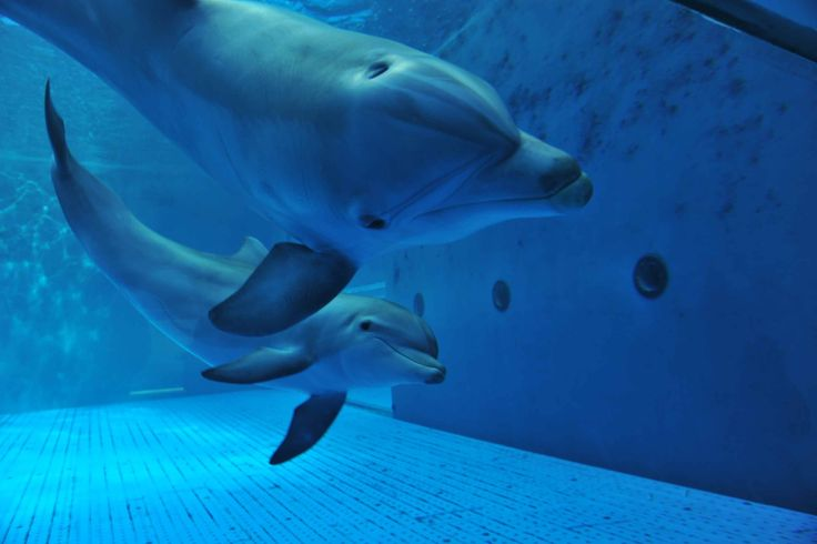 #AcquariodiGenova Goccia e Mamma  #AcquariodiGenova Goccia e her mam   #AcquarioVillage #tourism #italy #dolphins #delfini #genovamorethanthis #genoa #genova #loveanimals