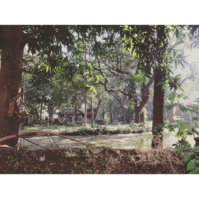 【tokimeki_akiko】さんのInstagramをピンしています。 《トトロに逢えるところ。  #トトロ #森 #ジブリぽい #神秘的 #神々しい #古い民家 #ロープで作ったブランコもある #うちの向かい #インド #インド生活 #マンガロール #nature #tree #sunrise #india》