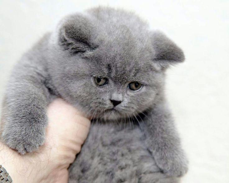 kim üzdü bu kediyi?