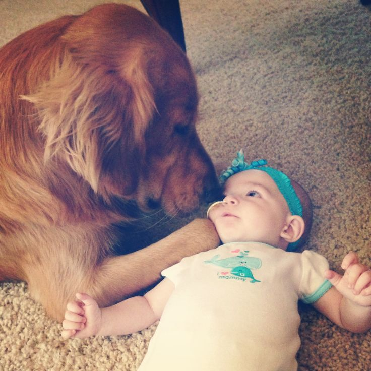 Best No Beta Love Than A Pets Images On Pinterest Adorable - 30 adorable pictures babies puppies will melt heart