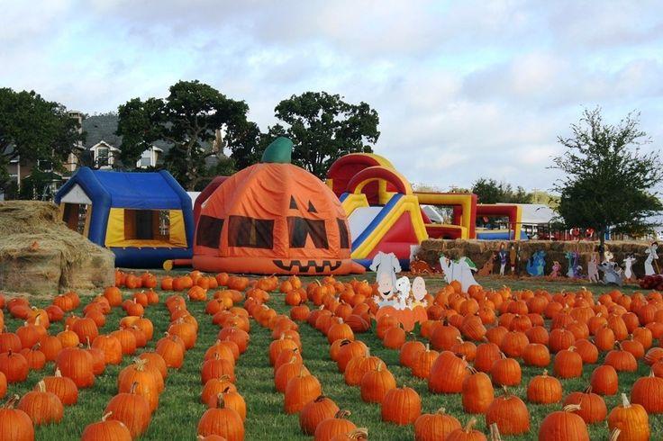 Best pumpkin patches in Texas