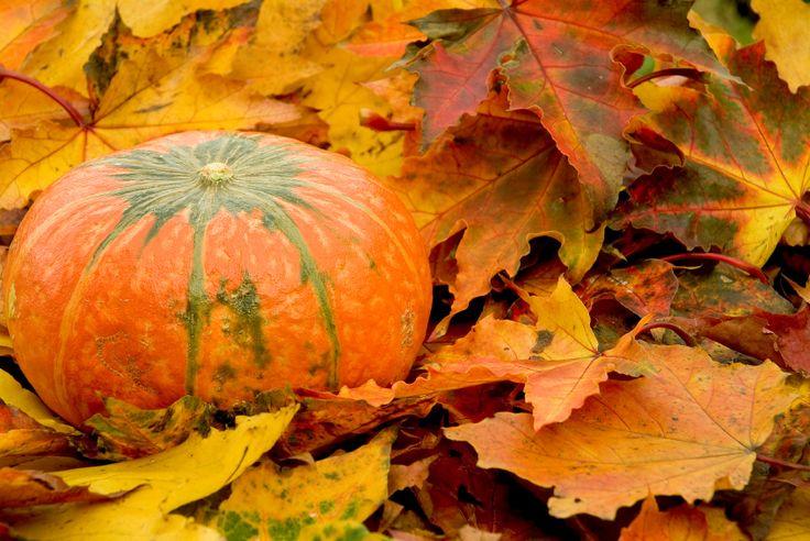 Free Autumn Adventures at Park Nature Screensavers For Mac