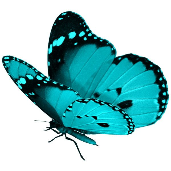 discover 17 best ideas about butterfly background on pinterest